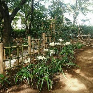 【お庭のお掃除】雑草刈り、花壇造りなどお手伝いします(Corres...