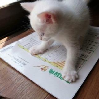 白い2匹子猫(オス&メス)の新しい...