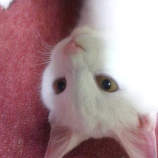 今年の2月20日頃うちの猫が桑園駅付近で迷子になりました