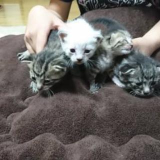 子猫の里親募集です(^^)