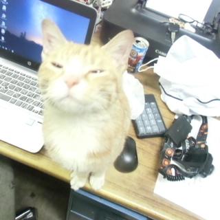 生後7か月程度の猫です。多分メス。