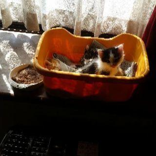 仔猫生まれました。