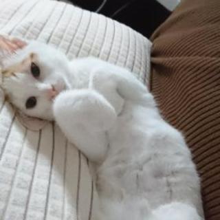 生後約3ヵ月子猫♀里親さん募集