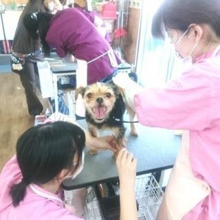 日曜フリータイム制トリミングコースが5月からスタート!神戸愛犬美容...