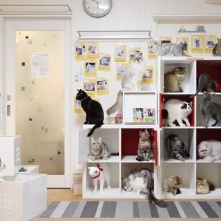 猫カフェ 猫の「ひなたぼっこ」