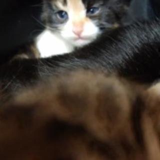ご返信遅くなりますすみません4月2日産まれ仔猫3匹いますママ猫の黒...