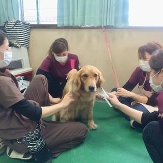 日曜日の自由な時間にトリマー技術を習いましょう!神戸愛犬美容専門...