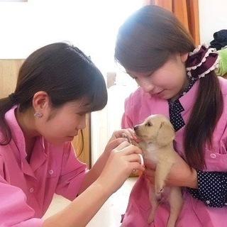 新コース、日曜日に自由な時間でトリマー技術を習えます。神戸愛犬美...
