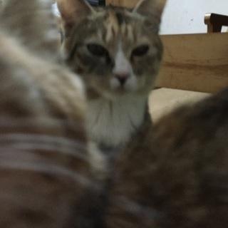 保護猫の里親さんを募集しています