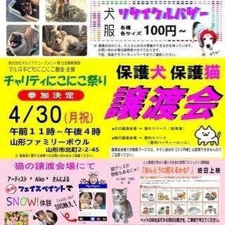 保護犬保護猫 譲渡会@山形市