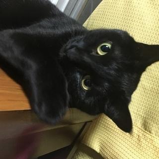 6歳になる黒猫の里親を探しています。