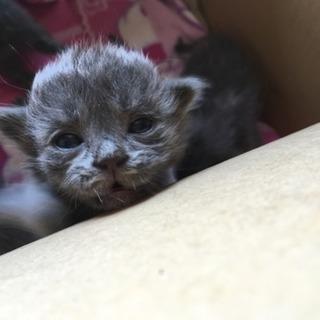 生まれたての子猫ちゃん5匹