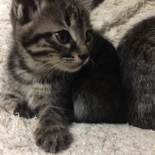 2018年2月10日生まれの仔猫の親になって貰えませんか?!
