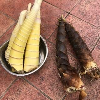 伸びた筍でメンマ作り&保存食作り
