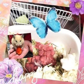 キンクマの赤ちゃん   決まりました(3)