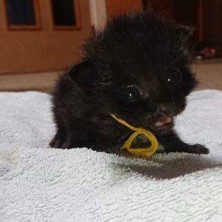 4月26日産まれ 黒2匹