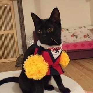 黒猫生後9カ月♀
