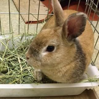 1才未満のウサギです♪
