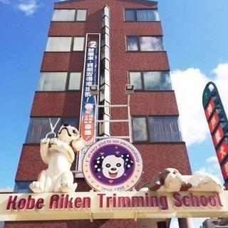 日曜日に自由にトリミング技術習得!神戸愛犬美容専門学院