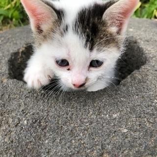 子猫の里親さん募集!