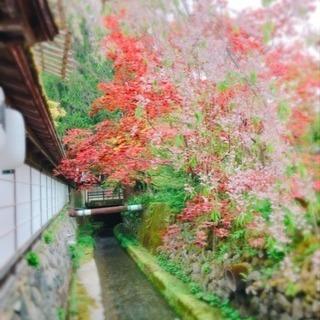 高野山でヨガ.瞑想.精進料理 − 大阪府