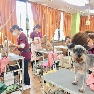 習うなら今でしょ!!新コースが嬉しい!神戸愛犬美容専門学院 姫路校...