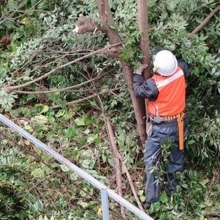 庭木や竹藪の伐採