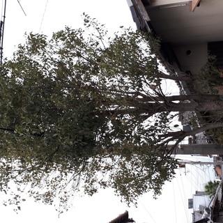【木の伐採】お任せ下さい!大きくなり、邪魔になった木をお切り致します。