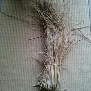 国産稲藁10束