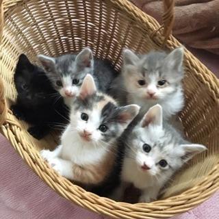子猫ちゃん5匹の里親さん募集!茨城県龍ケ崎市