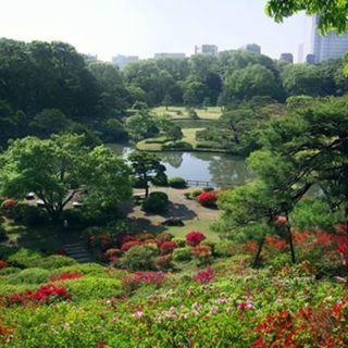 5月20日(日) ゆっくり出逢える!六義園と旧古河庭園を散歩!縁...