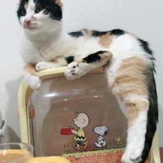 (ありがとうございます!)上から入る猫トイレ