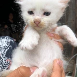 野良猫が4匹赤ちゃんを産みました。