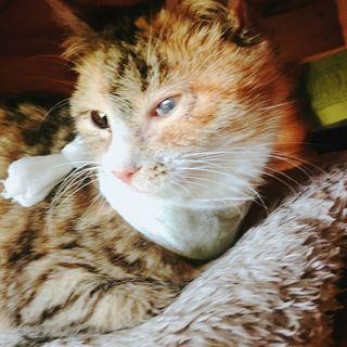 迷い猫だった生後約3ヶ月の女の子です