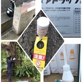 桜 松の害虫駆除 薬剤注入致します(埼玉県所沢市 狭山市 さいた...