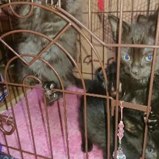 4兄妹の黒子猫