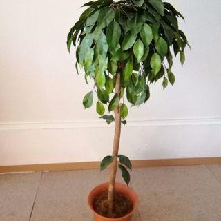 造花 観葉植物