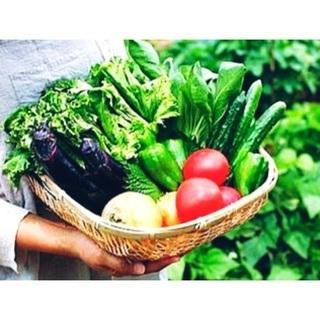 家庭菜園 余った野菜 下さい(^^)