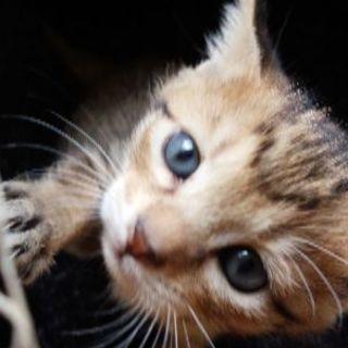 お目めがブルーの美形猫ちゃん