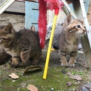 子猫3匹の里親さん探しています。