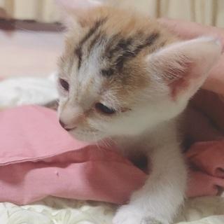 生後約1ヶ月の子猫です!の画像