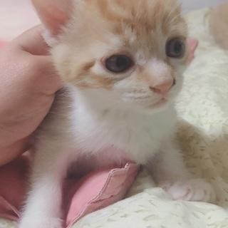 生後約1ヶ月の子猫です! - 猫
