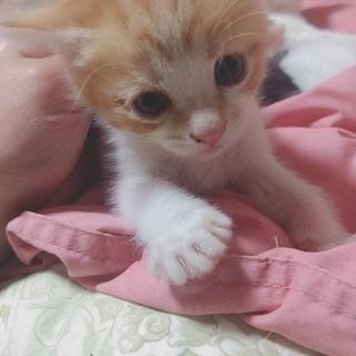 生後約1ヶ月の子猫です! − 宮城県