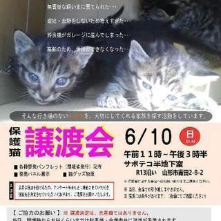 急募 子猫用のフードご支援のお願い