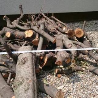 原木 薪 枝など(樹種:カシ) あげます 伐採(数本)も歓迎