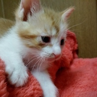 とても愛くるしい赤ちゃん猫!