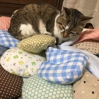 18歳の老猫で腎不全を患っております。