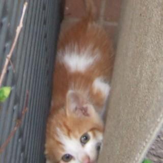 生後約1カ月の子猫4匹里親募集