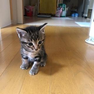仔猫の里親さんになってくれる方探してます