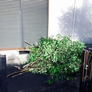 庭の木撤去